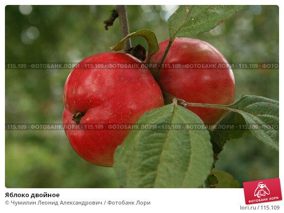 Купить «Яблоко двойное», фото № 115109, снято 9 сентября 2007 г. (c) Чумилин Леонид Александрович / Фотобанк Лори