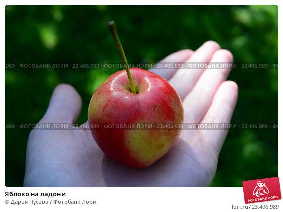 Яблоко на ладони. Стоковое фото, фотограф Дарья Чусова / Фотобанк Лори