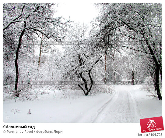 Яблоневый сад, фото № 104725, снято 20 января 2017 г. (c) Parmenov Pavel / Фотобанк Лори