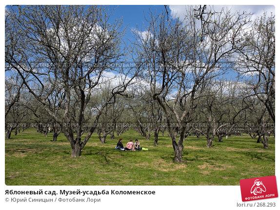 Яблоневый сад. Музей-усадьба Коломенское, фото № 268293, снято 27 апреля 2008 г. (c) Юрий Синицын / Фотобанк Лори