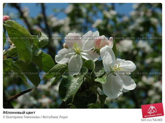 Яблоневый цвет, фото № 54065, снято 26 мая 2007 г. (c) Екатерина Тимонова / Фотобанк Лори
