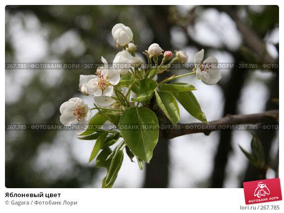 Яблоневый цвет, фото № 267785, снято 11 марта 2008 г. (c) Gagara / Фотобанк Лори