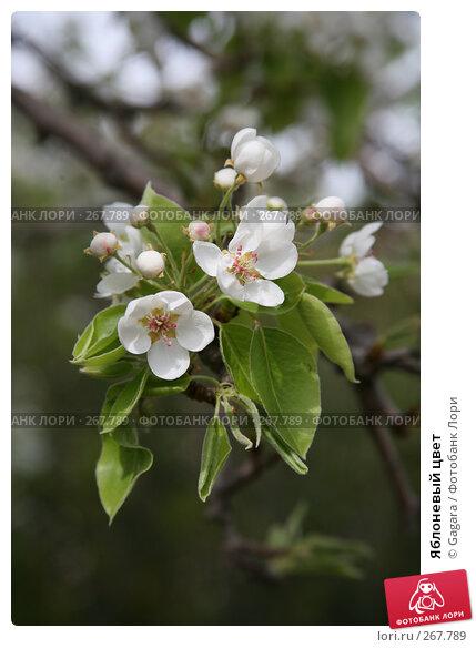 Яблоневый цвет, фото № 267789, снято 11 марта 2008 г. (c) Gagara / Фотобанк Лори