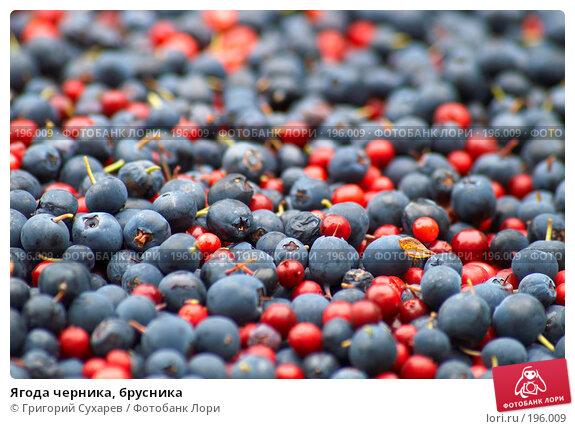 Ягода черника, брусника, фото № 196009, снято 21 августа 2006 г. (c) Григорий Сухарев / Фотобанк Лори