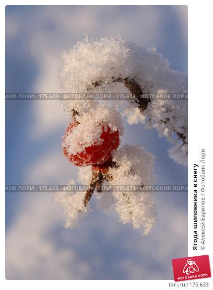 Ягода шиповника в снегу, фото № 175633, снято 9 января 2008 г. (c) Алексей Баринов / Фотобанк Лори