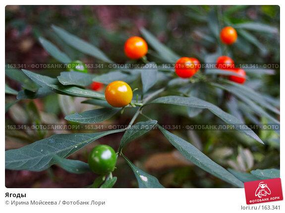 Ягоды, эксклюзивное фото № 163341, снято 20 ноября 2006 г. (c) Ирина Мойсеева / Фотобанк Лори