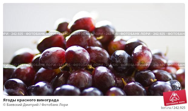 Ягоды красного винограда, фото № 242925, снято 5 апреля 2008 г. (c) Баевский Дмитрий / Фотобанк Лори