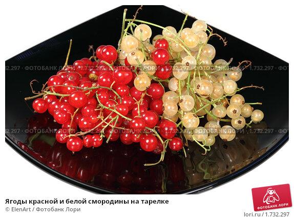 Купить «Ягоды красной и белой смородины на тарелке», фото № 1732297, снято 16 июля 2009 г. (c) ElenArt / Фотобанк Лори