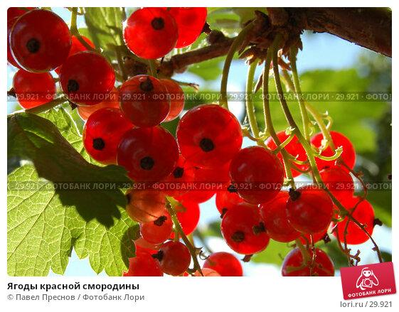 Ягоды красной смородины, фото № 29921, снято 6 июля 2006 г. (c) Павел Преснов / Фотобанк Лори