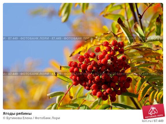 Ягоды рябины, фото № 87449, снято 23 сентября 2007 г. (c) Бутинова Елена / Фотобанк Лори