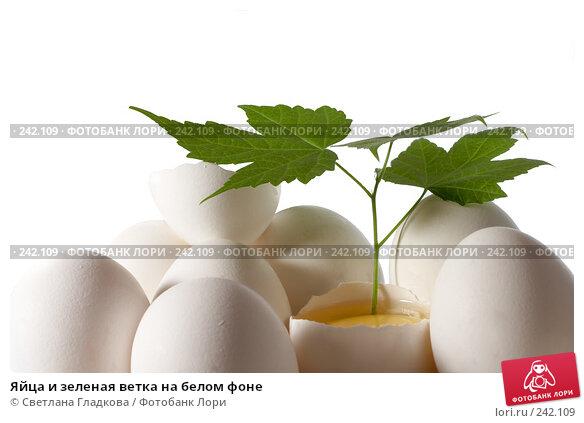 Яйца и зеленая ветка на белом фоне, фото № 242109, снято 25 июля 2017 г. (c) Cветлана Гладкова / Фотобанк Лори