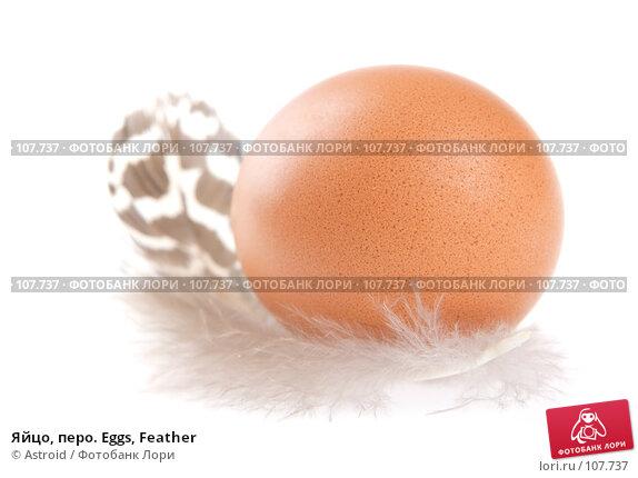 Яйцо, перо. Eggs, Feather, фото № 107737, снято 5 января 2007 г. (c) Astroid / Фотобанк Лори