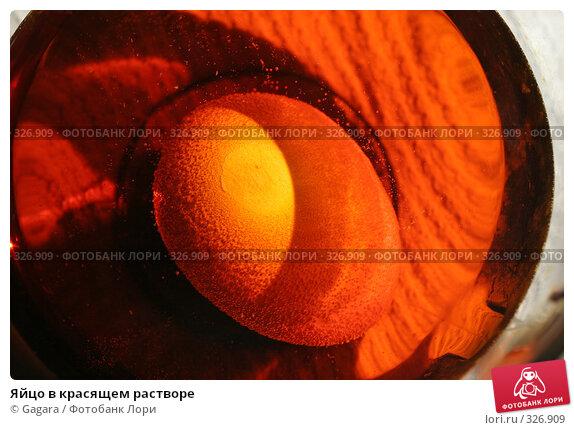 Яйцо в красящем растворе, фото № 326909, снято 22 августа 2007 г. (c) Gagara / Фотобанк Лори