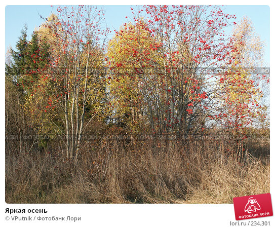 Яркая осень, фото № 234301, снято 12 октября 2005 г. (c) VPutnik / Фотобанк Лори