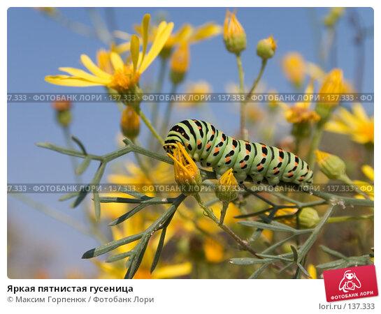 Яркая пятнистая гусеница, фото № 137333, снято 21 сентября 2004 г. (c) Максим Горпенюк / Фотобанк Лори