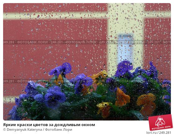 Яркие краски цветов за дождливым окном, фото № 249281, снято 12 апреля 2008 г. (c) Demyanyuk Kateryna / Фотобанк Лори