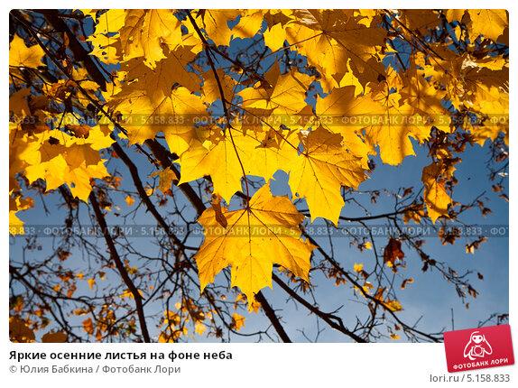 Купить «Яркие осенние листья на фоне неба», фото № 5158833, снято 12 октября 2013 г. (c) Юлия Бабкина / Фотобанк Лори
