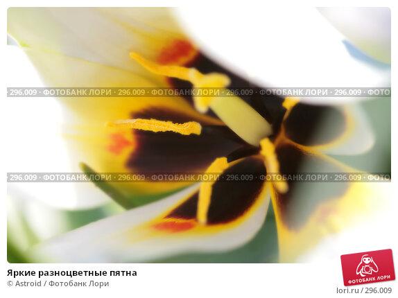 Яркие разноцветные пятна, фото № 296009, снято 29 апреля 2008 г. (c) Astroid / Фотобанк Лори