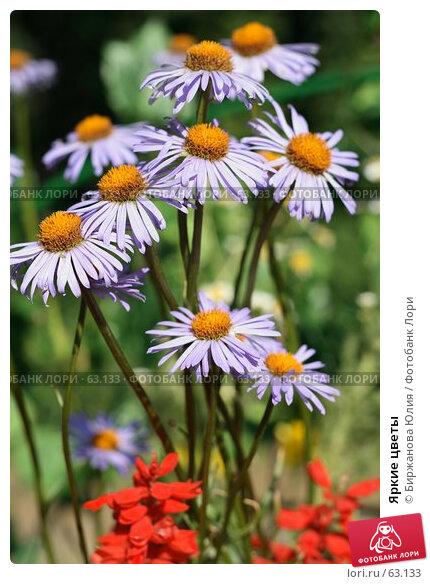 Яркие цветы, фото № 63133, снято 21 июня 2007 г. (c) Биржанова Юлия / Фотобанк Лори