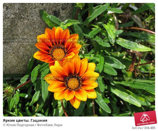 Яркие цветы. Гацания, фото № 334485, снято 11 июня 2008 г. (c) Юлия Селезнева / Фотобанк Лори