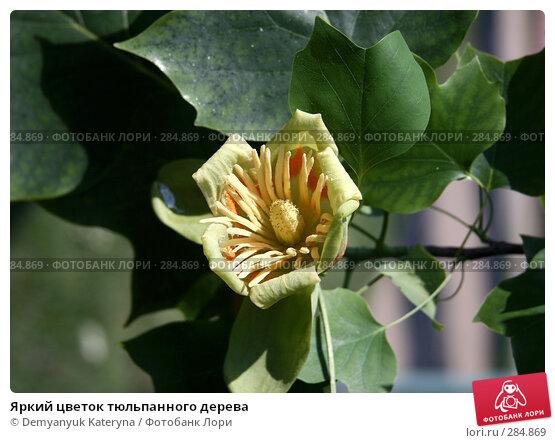Яркий цветок тюльпанного дерева, фото № 284869, снято 14 мая 2008 г. (c) Demyanyuk Kateryna / Фотобанк Лори