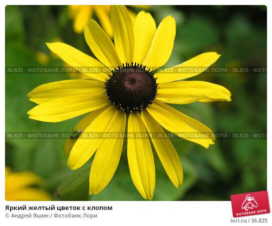 Яркий желтый цветок с клопом, фото № 36825, снято 16 июля 2005 г. (c) Андрей Яшин / Фотобанк Лори