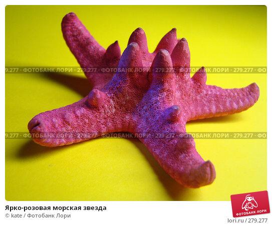 Ярко-розовая морская звезда, фото № 279277, снято 9 января 2008 г. (c) Екатерина Цуканова / Фотобанк Лори
