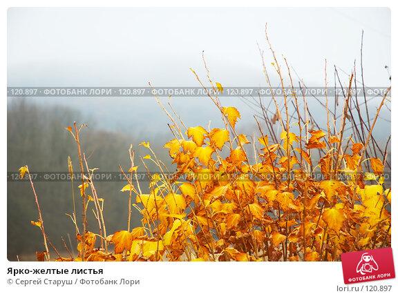 Ярко-желтые листья, фото № 120897, снято 26 ноября 2006 г. (c) Сергей Старуш / Фотобанк Лори