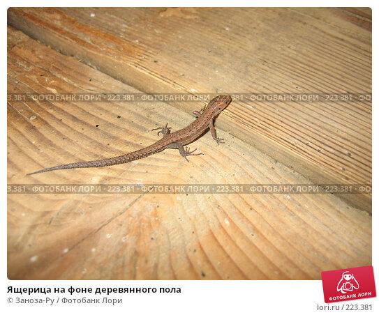 Ящерица на фоне деревянного пола, фото № 223381, снято 9 мая 2006 г. (c) Заноза-Ру / Фотобанк Лори