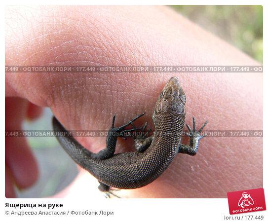 Ящерица на руке, фото № 177449, снято 1 августа 2006 г. (c) Андреева Анастасия / Фотобанк Лори