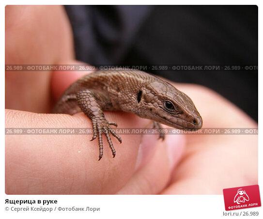 Ящерица в руке, фото № 26989, снято 16 апреля 2006 г. (c) Сергей Ксейдор / Фотобанк Лори