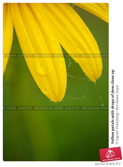Купить «Yellow petals with drops of dew close up», фото № 6413717, снято 27 сентября 2012 г. (c) Ingram Publishing / Фотобанк Лори