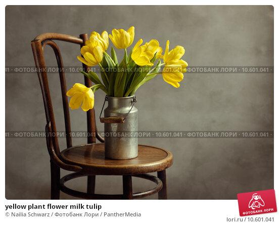 yellow plant flower milk tulip. Стоковое фото, фотограф Nailia Schwarz / PantherMedia / Фотобанк Лори