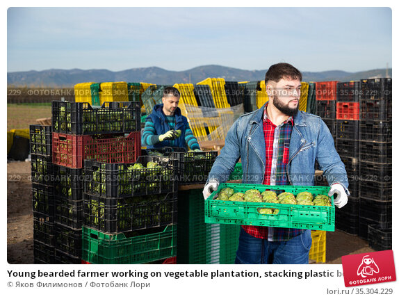 Young bearded farmer working on vegetable plantation, stacking plastic boxes with artichokes. Стоковое фото, фотограф Яков Филимонов / Фотобанк Лори