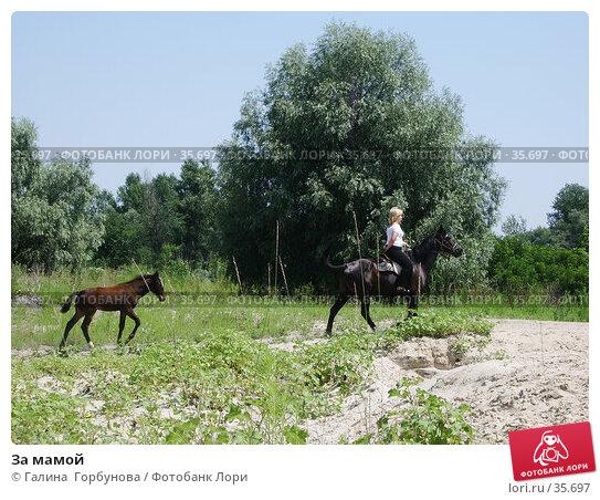 За мамой, фото № 35697, снято 23 июля 2005 г. (c) Галина  Горбунова / Фотобанк Лори