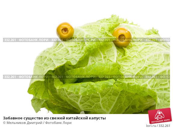 Купить «Забавное существо из свежей китайской капусты», фото № 332261, снято 8 июня 2008 г. (c) Мельников Дмитрий / Фотобанк Лори