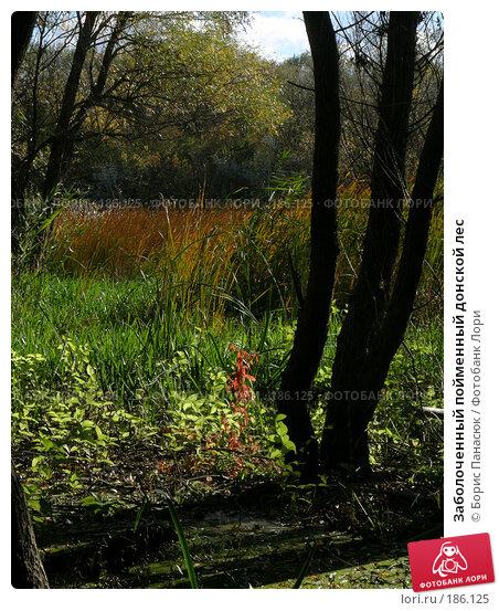 Заболоченный пойменный донской лес, фото № 186125, снято 8 сентября 2006 г. (c) Борис Панасюк / Фотобанк Лори