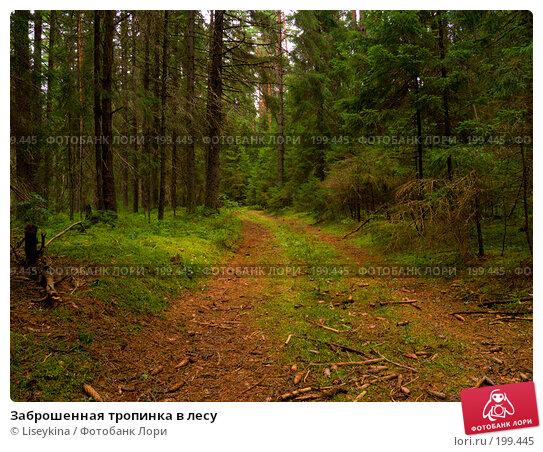 Заброшенная тропинка в лесу, фото № 199445, снято 29 июля 2007 г. (c) Liseykina / Фотобанк Лори