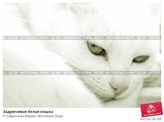 Задумчивая белая кошка, фото № 26225, снято 28 августа 2005 г. (c) Сафронова Мария / Фотобанк Лори