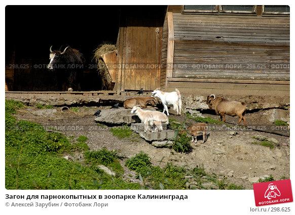 Купить «Загон для парнокопытных в зоопарке Калининграда», фото № 298625, снято 22 сентября 2007 г. (c) Алексей Зарубин / Фотобанк Лори