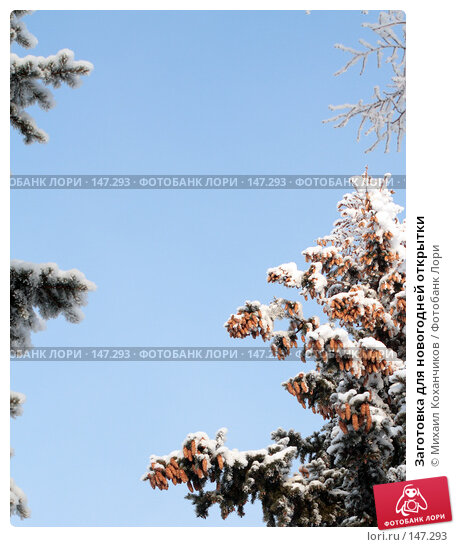 Заготовка для новогодней открытки, фото № 147293, снято 12 декабря 2007 г. (c) Михаил Коханчиков / Фотобанк Лори