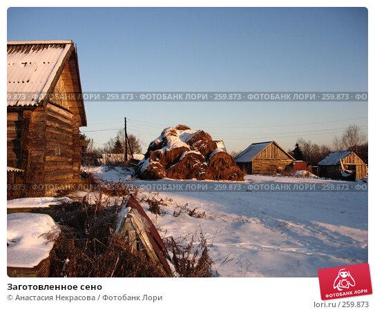 Заготовленное сено, фото № 259873, снято 5 января 2008 г. (c) Анастасия Некрасова / Фотобанк Лори