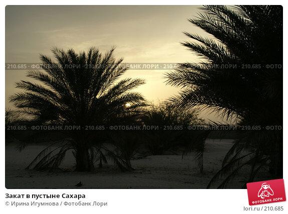 Закат в пустыне Сахара, фото № 210685, снято 13 июня 2006 г. (c) Ирина Игумнова / Фотобанк Лори