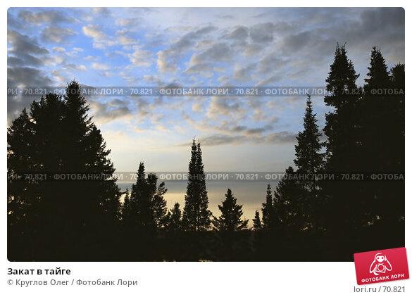 Купить «Закат в тайге», эксклюзивное фото № 70821, снято 5 июня 2007 г. (c) Круглов Олег / Фотобанк Лори