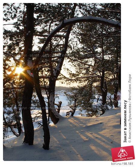 Закат в зимнем лесу, фото № 98181, снято 31 января 2007 г. (c) Анастасия Лукьянова / Фотобанк Лори