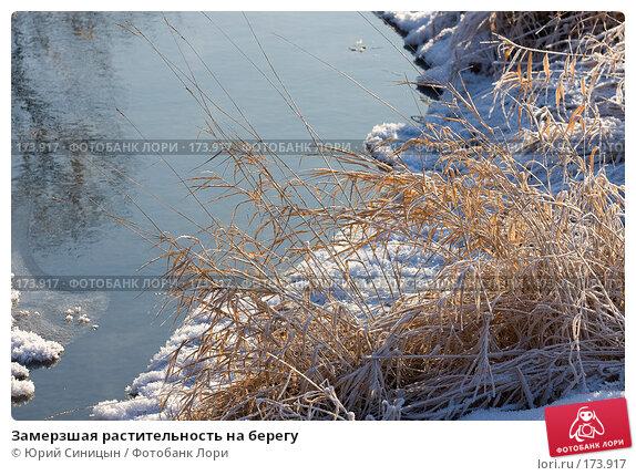 Замерзшая растительность на берегу, фото № 173917, снято 8 января 2008 г. (c) Юрий Синицын / Фотобанк Лори