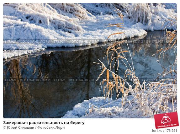 Замерзшая растительность на берегу, фото № 173921, снято 8 января 2008 г. (c) Юрий Синицын / Фотобанк Лори