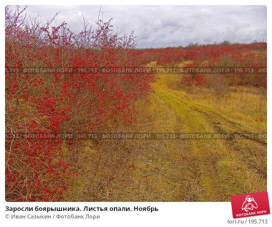 Заросли боярышника. Листья опали. Ноябрь, фото № 195713, снято 13 ноября 2004 г. (c) Иван Сазыкин / Фотобанк Лори