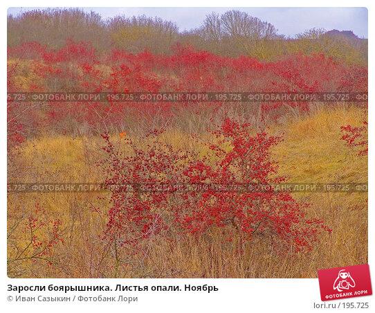 Заросли боярышника. Листья опали. Ноябрь, фото № 195725, снято 13 ноября 2004 г. (c) Иван Сазыкин / Фотобанк Лори