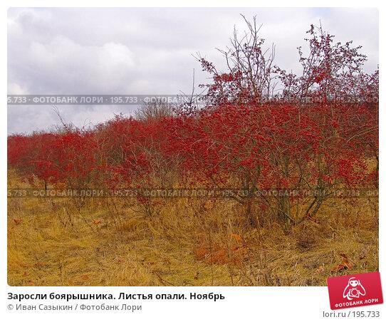 Заросли боярышника. Листья опали. Ноябрь, фото № 195733, снято 13 ноября 2004 г. (c) Иван Сазыкин / Фотобанк Лори